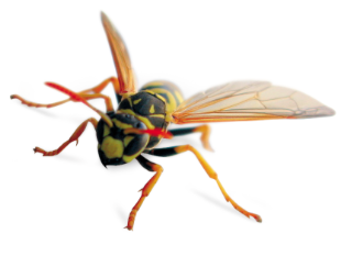 Any wasp sightings in or around your home or business please contact us immediately on 07838 368700 or 01295 255860.